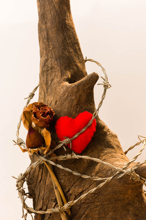 love hurts: Sharp barbed wired used as a barrier bound around a red heart - path included