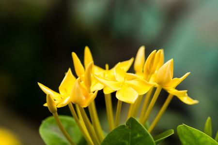 spike: yellow flower spike