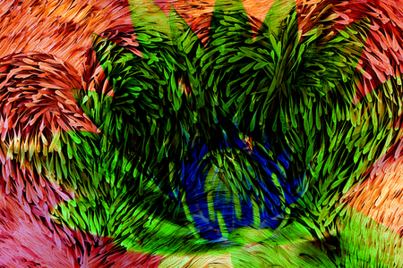langosta: Negro de langostas semillas para colgar y seca Foto de archivo