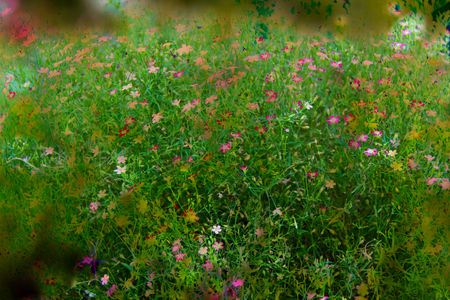 sweed flowers small for blurred Foto de archivo