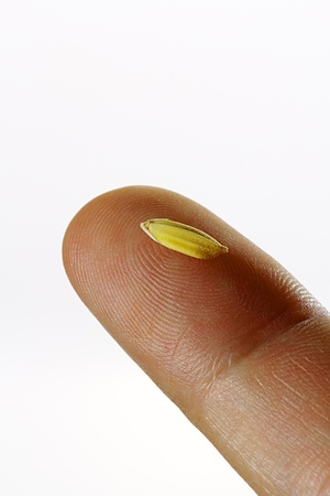 afield: Natural rice grain on finger, closeup Stock Photo