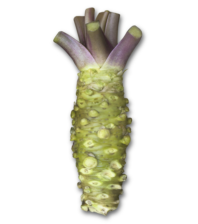fresh wasabi root, raw wasabi - japanese food ingredient, horseradish, condiment for sushi, sashimi - isolate on white with clip path