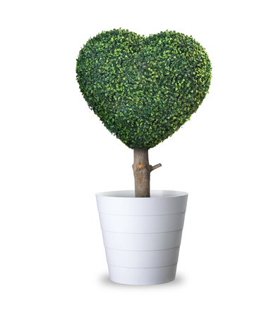 Heart shaped tree in pot realistic photo image with clip path. Love symbol tree, love sign tree isolate on white background.