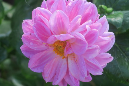 pink flower