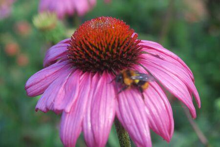 playfulness: pink flower