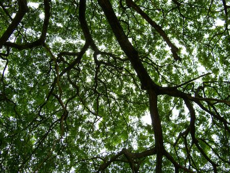 Looking up under a big tree.