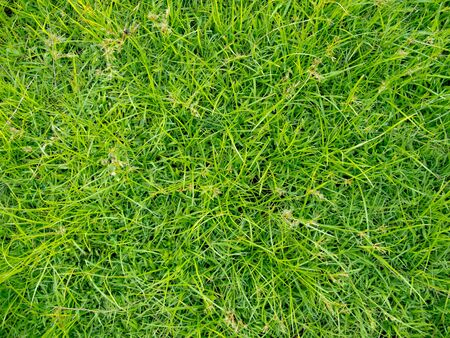 Close up grass in the park for texturing.