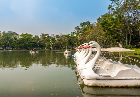 lumpini: Bangkok, Thailand - January 29, 2015 Swan-boat for rent in Lumpini Park. Stock Photo