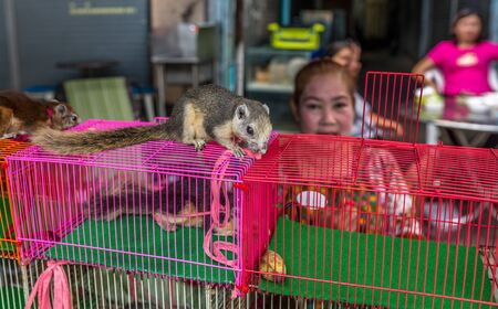 Bangkok, Thailand - Nov 14, 2015 Unidentified woman is selling a squirrel in animal zone at Chatuchak, the biggest weekend market in South East Asia. Editoriali