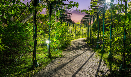 horizental: Bangkok, Thailand Nov 22, 2015 Queen Sirikit Park is a botanical garden in Chatuchak district, Bangkok, Thailand. Covering an area of 0.22 km², it is part of the larger Chatuchak Park complex. Editorial