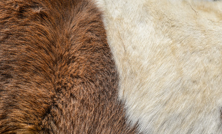 ful: Texture of a animals ful