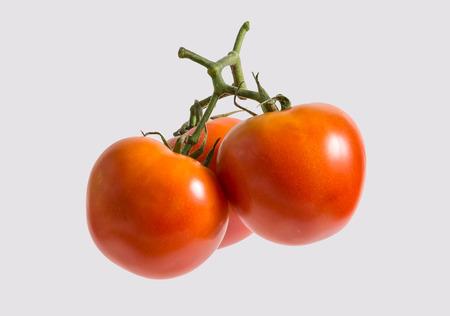 Beautiful bunch of tomatos in studio