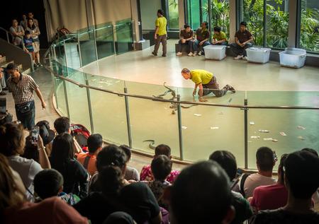 Bangkok, Thailand - Oct 8, 2016 Show of man play with cobra at Siam Serpentarium, the biggest museum snake Editorial