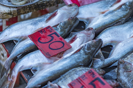 Fish on sell on street food market of Thailand