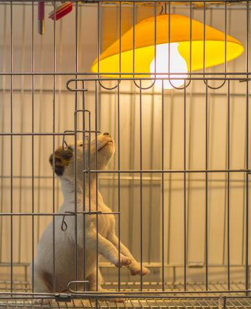 Small white dog looking lamp or Selling small dog