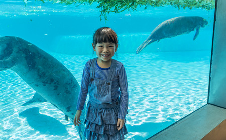 Asian little girl happy in zoo with manatees in glass tank. Little girl on vacation in summer.