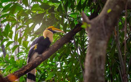 Great hornbill on tree, selective focus. Stock Photo