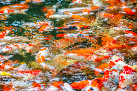 Beautiful blurred image of fancy carps Stock fotó