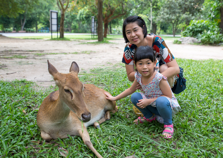 Asian tourist mother and little daughter feeding deer in an open zoo of Thailand. Stock fotó