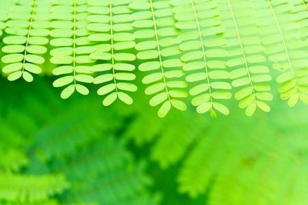 Beautiful green from nature. Close up beautiful fern with space for text.