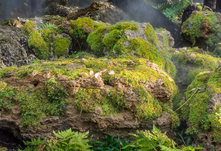 Large stone covered with green moss and covered with mist. Large stone for display products in nature concept.