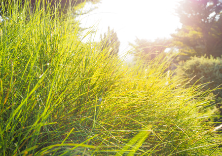Blurred grass against sunlight and sparking of dew. Imagens