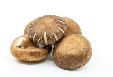 Close up isolated fresh Shiitake mushroom on the White background. The small pile of organic Shiitake mushroom.