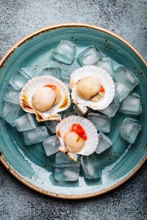 Raw fresh uncooked scallops in shells on ice, on plate on grey rustic concrete background, top view, close-up. Seafood concept pattern