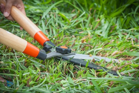 gardener  cutting grass with scissors photo