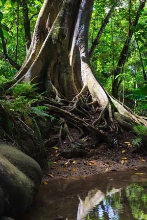 boom wortels: de boomwortels uitspreiding over de bodem