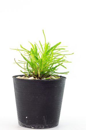 sapling in pot on white background photo