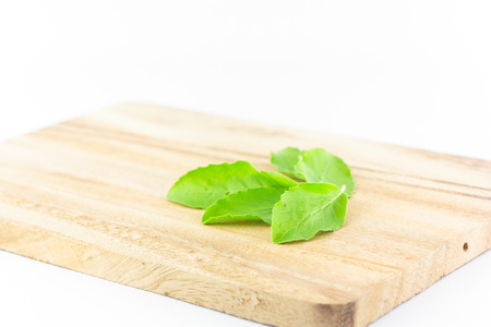 trencher: basil leaves on chopping block on white background :  ingredient for Thai food Stock Photo