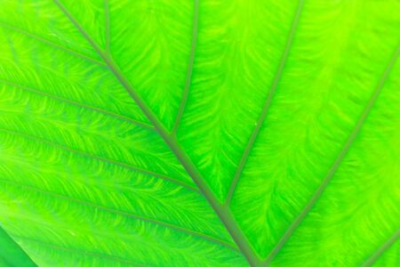 assort: textures of the green leaf : nature blackground