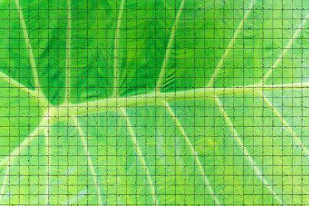 assort: creation of tiles on green leaf background