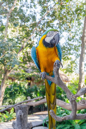 maccaw: beautiful  macow standing on branch Stock Photo