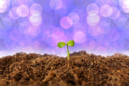 botanical farms: new life : young sapling on soil