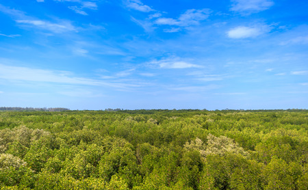 view of mangrove forest from above with blue sky