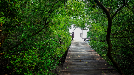 wooden walk way through the mangrove forest