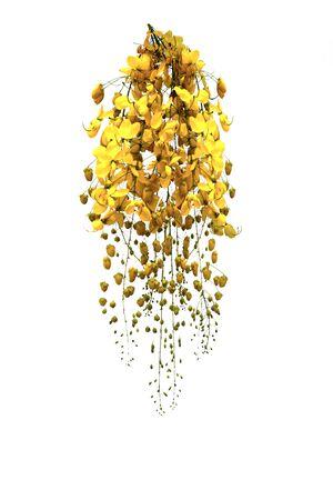 golden flower isolated on white background
