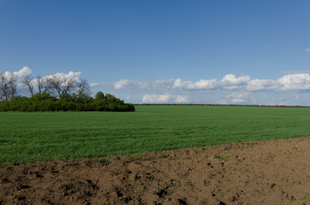 plowed field: Green wheat field and plowed field on a background of blue sky