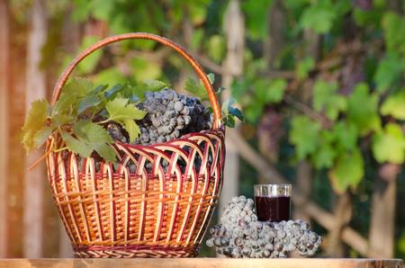 desk: Glass of grape juice and wicker basket with grapes in the sun, the garden in the background Stock Photo