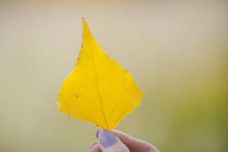 Foglia gialla in mano su uno sfondo di vegetazione. Avvicinamento
