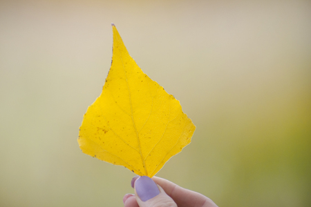Yellow leaf in hand against a background of greenery. Close-up Archivio Fotografico