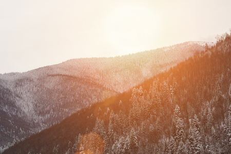 Slopes of the mountains with dense snow-covered coniferous forest. Winter landscape Фото со стока