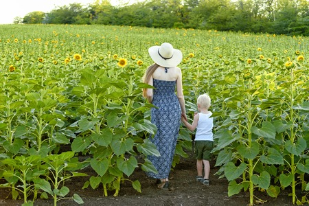 Mom and little son are walking in the blossoming field of sunflowers. Back view.