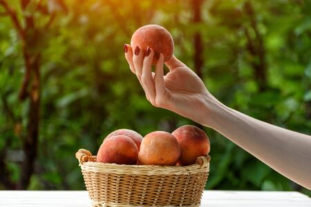 Ripe peach in a female hand. Wicker basket, green garden on the background. Close-up. Fruit season Zdjęcie Seryjne