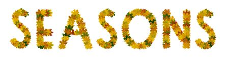 Phrase Seasons of yellow, green and orange maple autumn leaves close-up. Isolate on white background. Stock Photo
