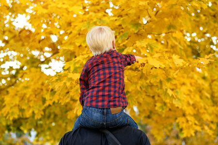 Blond boy in a plaid shirt sits on his fathers shoulders. Back view. Autumn concept