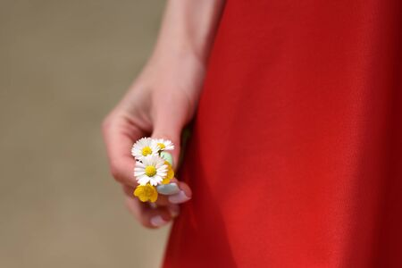 Chamomile closeup of a female hand. Girl in red dress.
