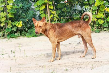 brow: Portrait of a brow dog